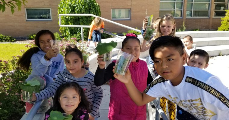 Stansbury creating habitats with bugs and plants